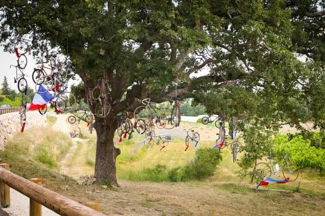Bike Tree - CC