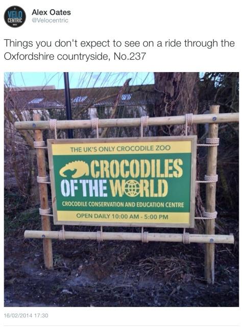 Crocodile ride