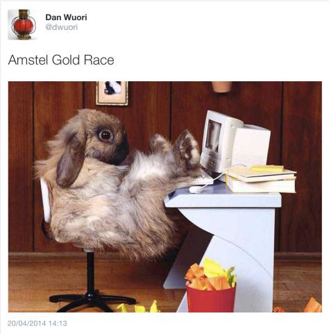 AG race bunny
