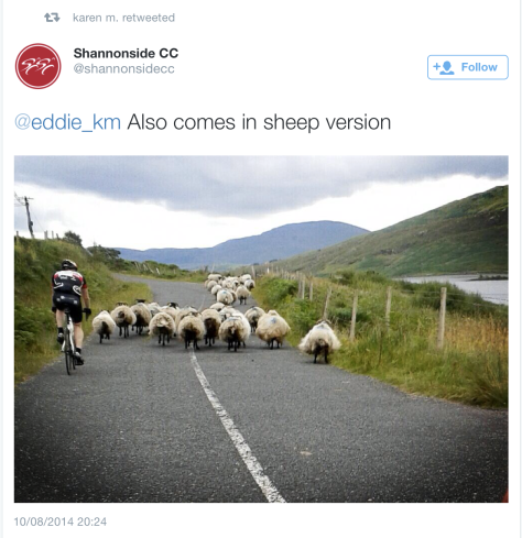 G cows sheep road