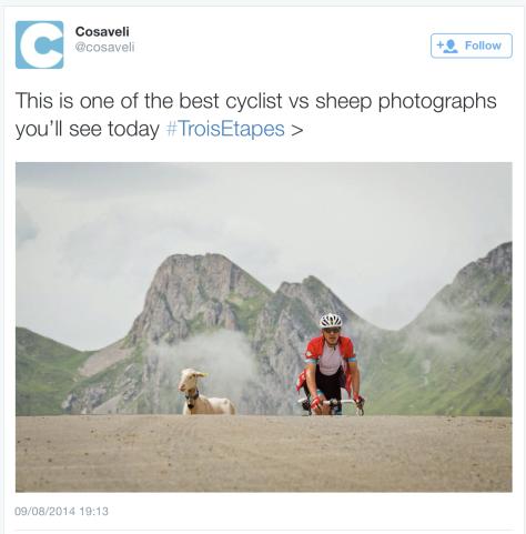 G sheep