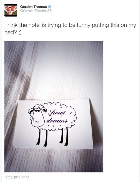 Thomas sheep 1