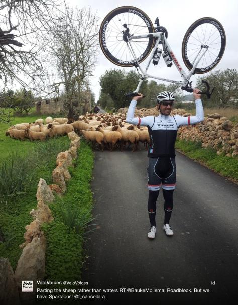 Fabs sheep 1