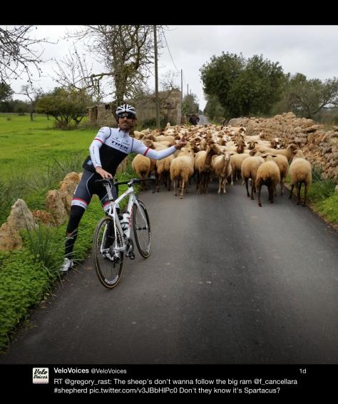Fabs sheep 2