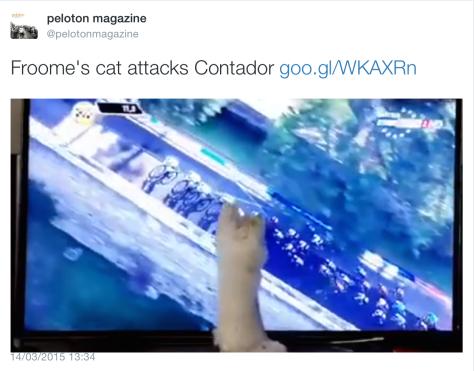 TA cat Contador