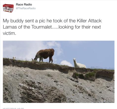 Cow llama