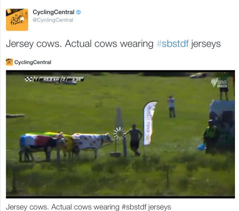 Tour jersey cows
