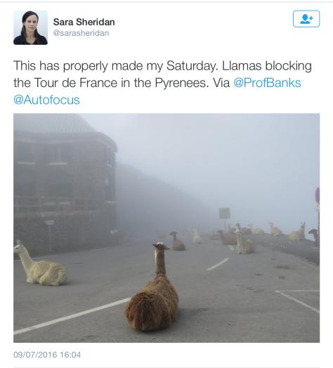 Random llamas